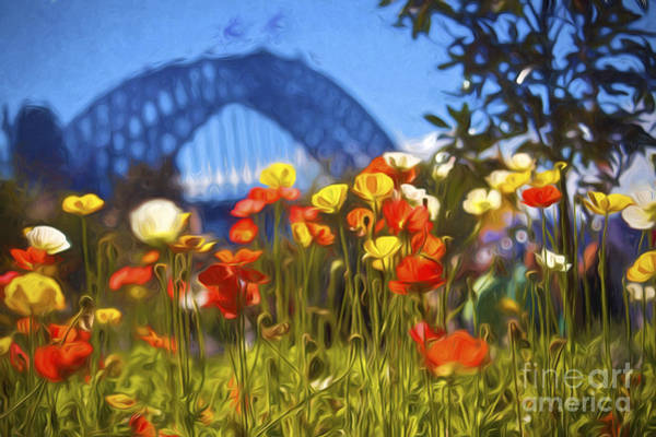Wall Art - Photograph - Tulips With Harbour Bridge Backdrop by Sheila Smart Fine Art Photography