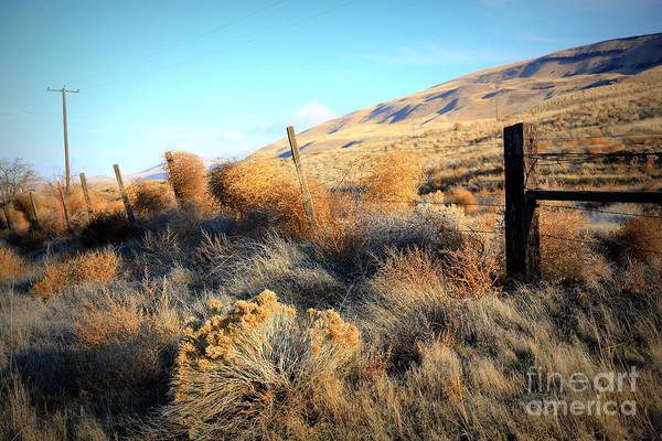 Photograph - Tumbling Tumbleweeds by Carol Groenen