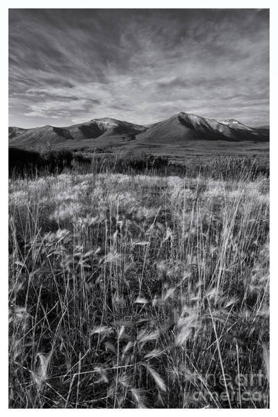 Wall Art - Photograph - Tundra Summer by Priska Wettstein