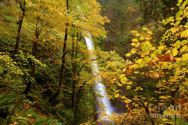 Photograph - Tunnel Falls  by Adam Jewell