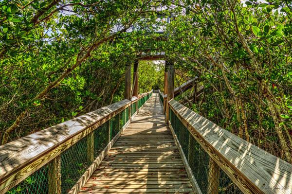 Tunnel Of Mangrove Green Art Print
