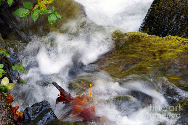 Foaming Wall Art - Photograph - Turbulent Waters by Sharon Talson