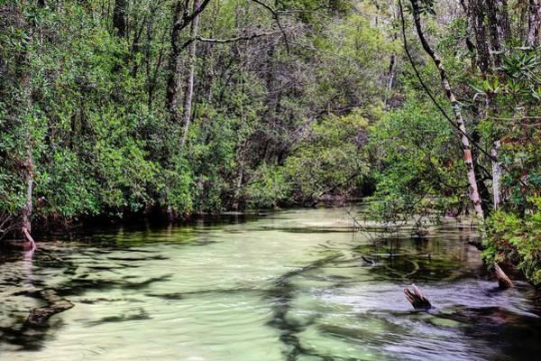 Photograph - Turkey Creek Niceville by JC Findley