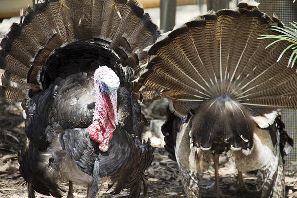 Art Print featuring the photograph Turkey by Debbie Cundy