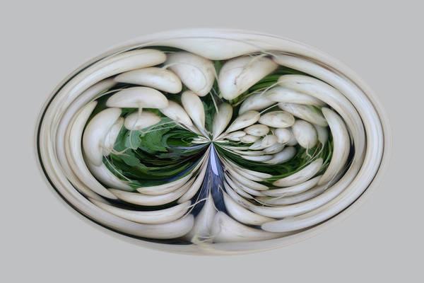Photograph - Turnips by Jim Baker