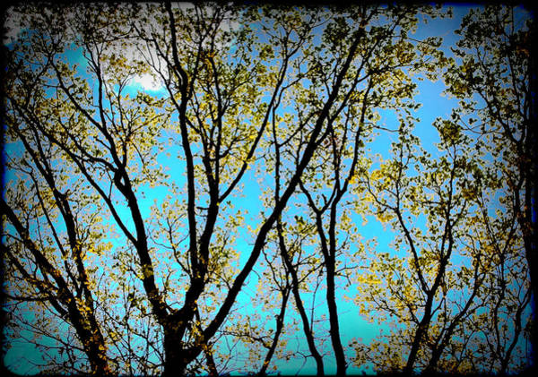 Photograph - Turquoise Sky Vivid Tree by Denise Beverly