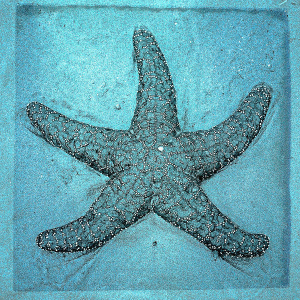 Photograph - Turquoise Star by Roxy Hurtubise