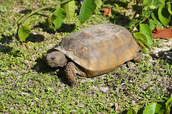 Photograph - Turtle  by Bill Hosford
