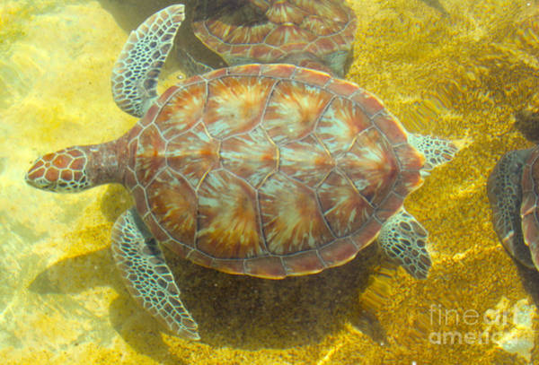 Hawksbill Turtle Photograph - Turtle Day by Carey Chen