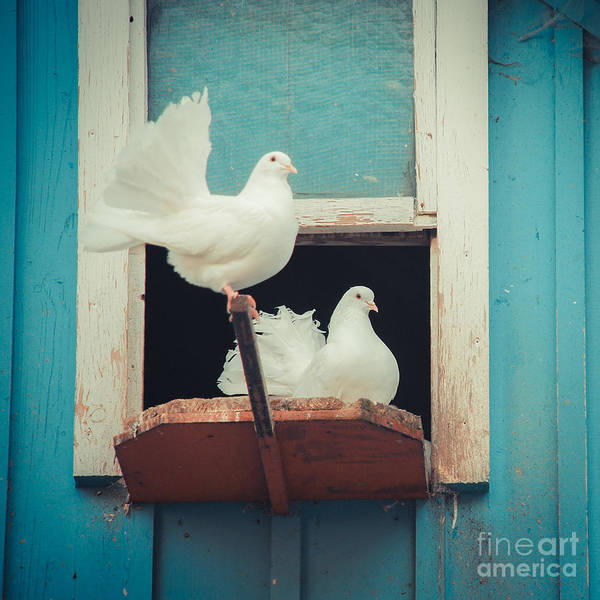 Photograph - Turtle Doves 1x1 by Hannes Cmarits