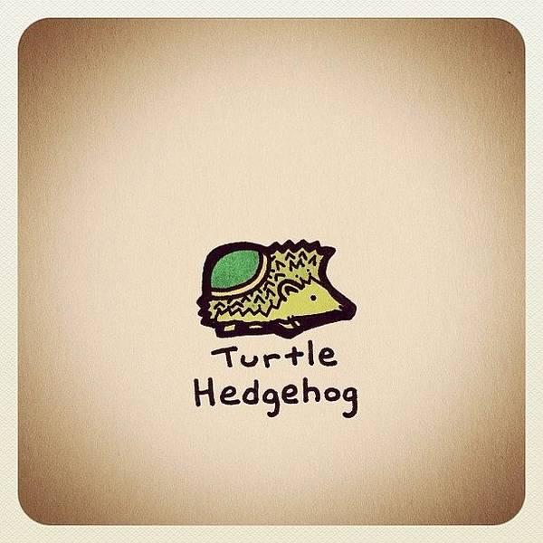 Reptiles Wall Art - Photograph - Turtle Hedgehog by Turtle Wayne