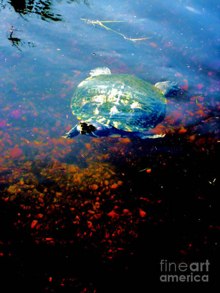 Photograph - Turtle. Beautiful Picture by Oksana Semenchenko