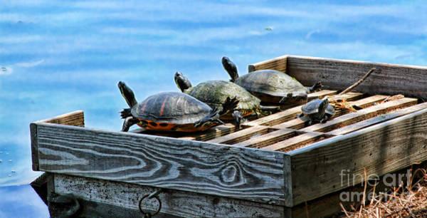 Photograph - Turtle Power Of Four By Diana Sainz by Diana Raquel Sainz