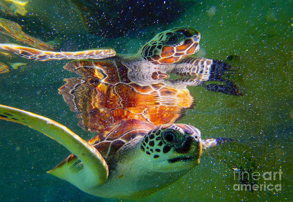 Hawksbill Turtle Photograph - Turtle Reflection by Carey Chen