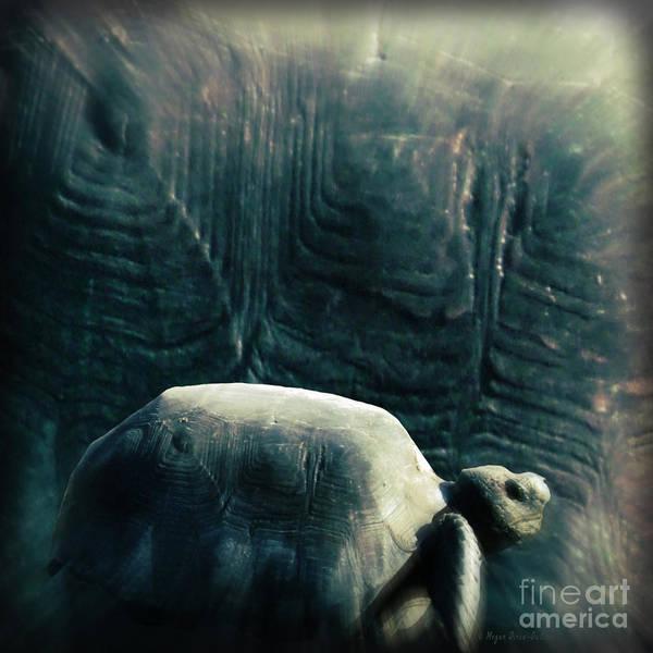 Photograph - Turtle Shield by Megan Dirsa-DuBois