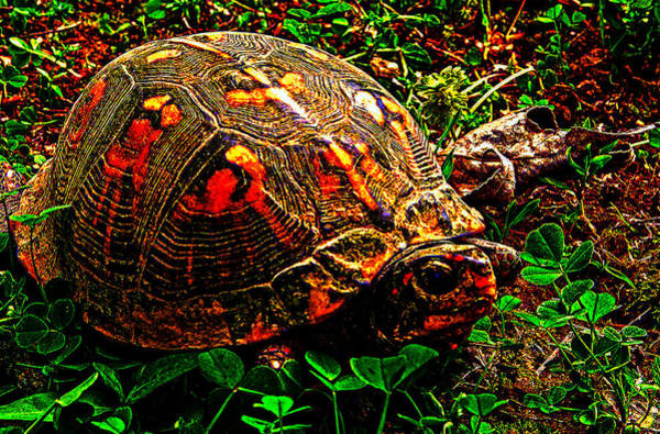 Photograph - Turtle Time At Little Grassy by Jeff Kurtz