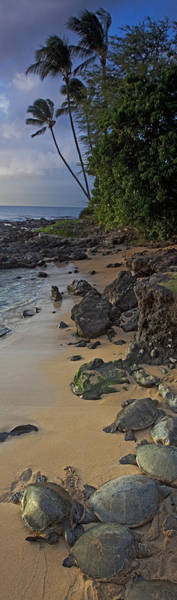 Kapalua Photograph - Turtle Town  by James Roemmling