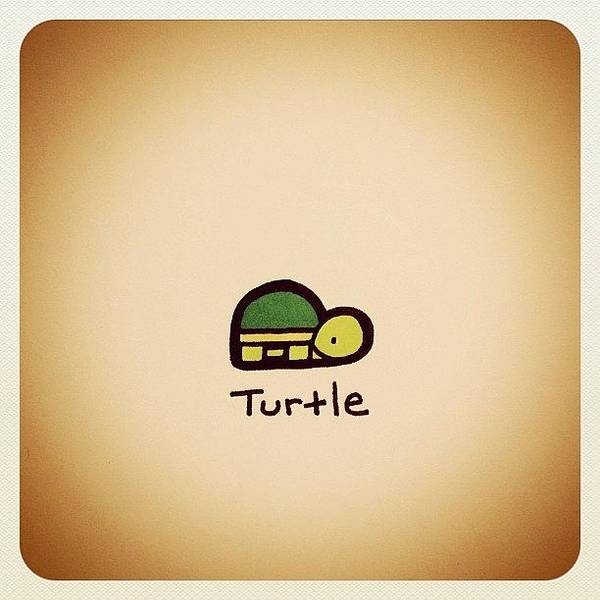 Reptiles Wall Art - Photograph - Turtle by Turtle Wayne