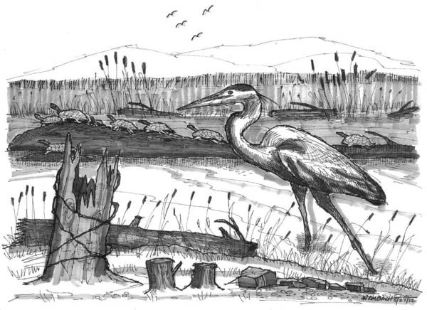 Drawing - Turtles And Heron by Richard Wambach