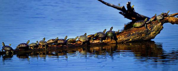 Amana Wall Art - Photograph - Turtles by Jamieson Brown