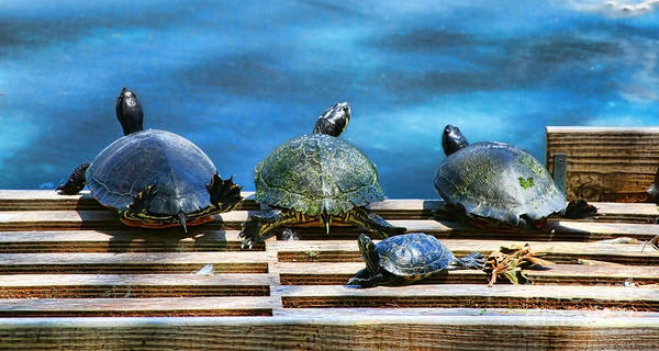 Photograph - Turtles On Lake Eola By Diana Sainz by Diana Raquel Sainz