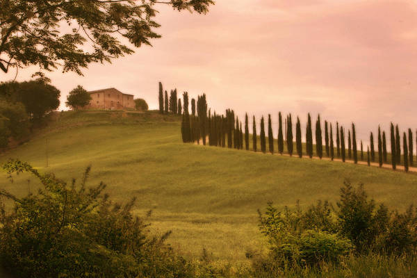 Photograph - Tuscan Cypress Drive by Bob Coates