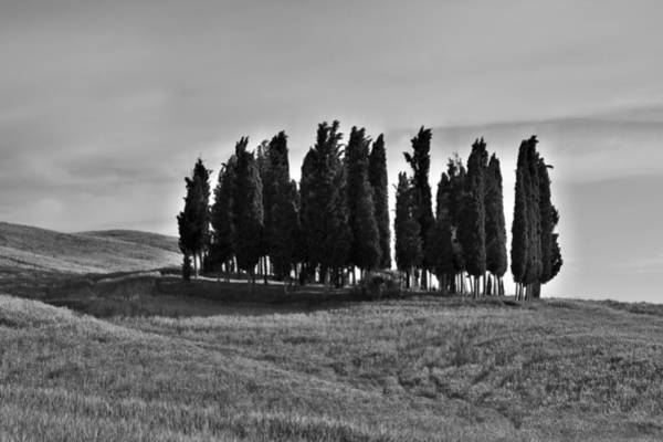 Photograph - Tuscan Cypress Trees Bw by Ivan Slosar