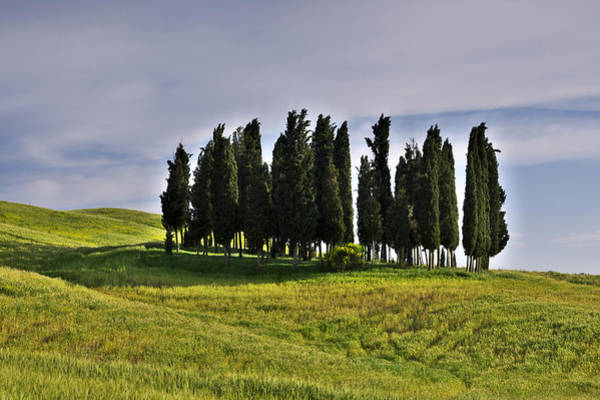 Photograph - Tuscan Cypress Trees by Ivan Slosar