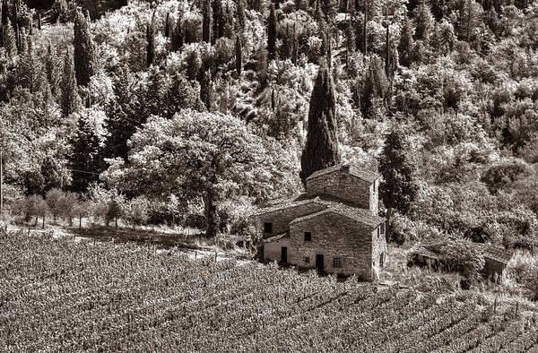 Photograph - Tuscan Vinyard by Michael Kirk