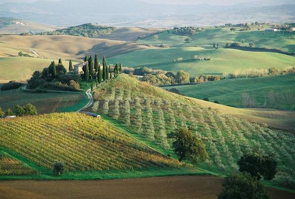Tuscany Photograph - Tuscany Fields by Dmitri Korobtsov