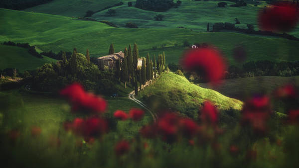 Cypress Photograph - Tuscany - Spring Blossoms by Jean Claude Castor