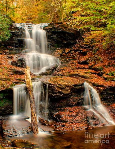 Photograph - Tuscarora Falls - Ricketts Glen by Nick Zelinsky