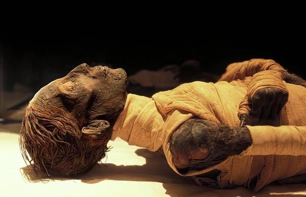 Wall Art - Photograph - Tuthmosis Iv Mummy by Patrick Landmann/science Photo Library
