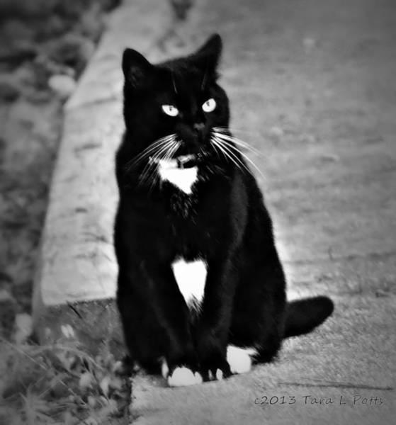 Rockdale County Photograph - Tuxedo Cat by Tara Potts