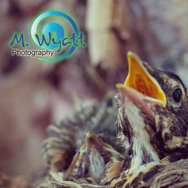 Spring Photograph - Tweet! #spring #babybirds by Melissa Wyatt