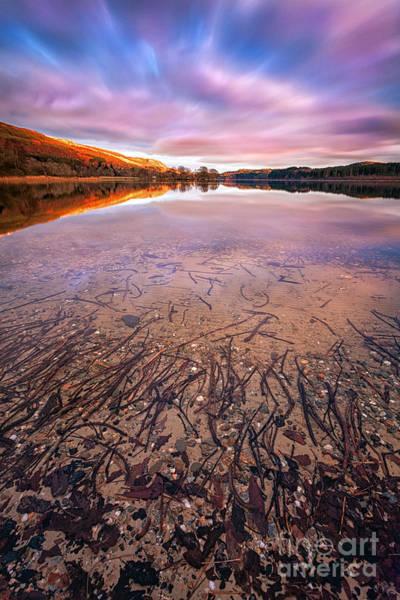 Loch Ard Photograph - Twigs And Leaves  by John Farnan
