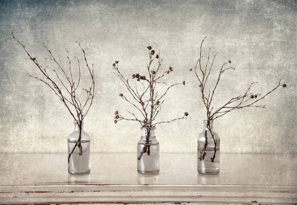 Glass Vase Photograph - Twigs In Bottles by Carol Leigh