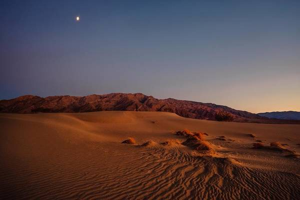 Photograph - Twilight At The Dunes  by Gene Garnace