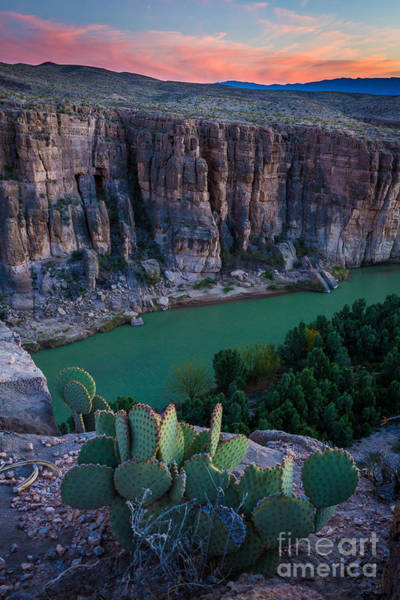 Rio Grande River Photograph - Twilight Cactus by Inge Johnsson