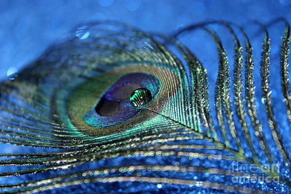 Peacock Photograph - Twilight Escape by Krissy Katsimbras