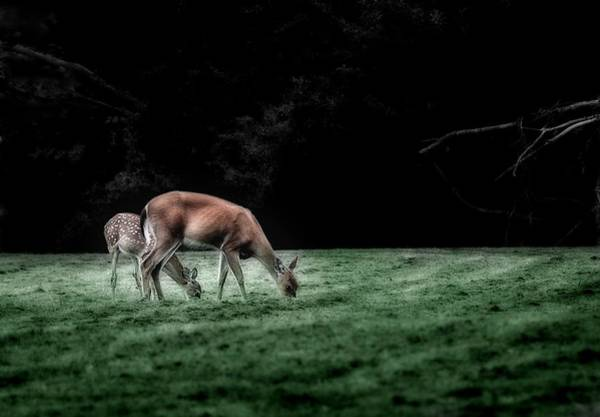 Photograph - Twilight Grazing by Mark Fuller