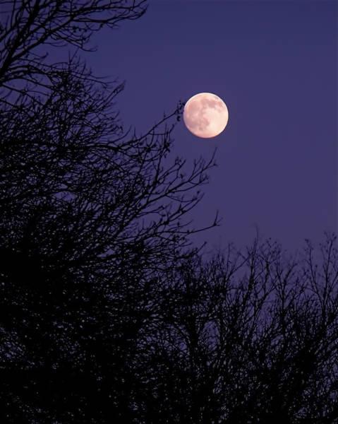 Photograph - Twilight Moon by Rona Black