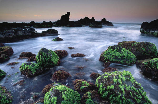 Seaweed Photograph - Twilight Seascape With Green Seaweed by Karl Lehmann