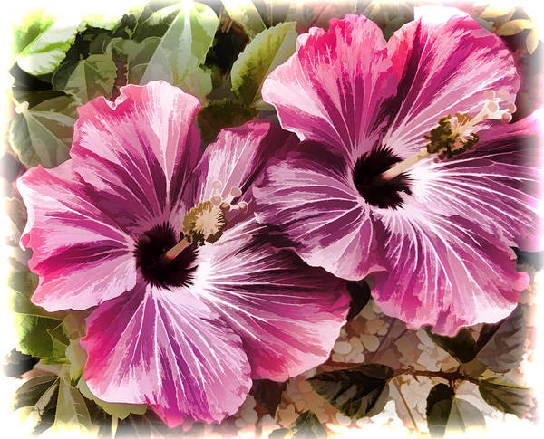 Photograph - Twin Hibiscus by Donna Proctor