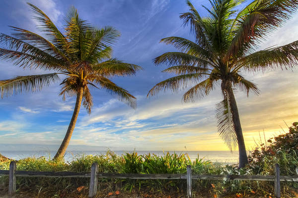 Hobe Sound Photograph - Twin Palms by Debra and Dave Vanderlaan