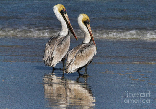 Photograph - Twin Pelicans by Deborah Benoit