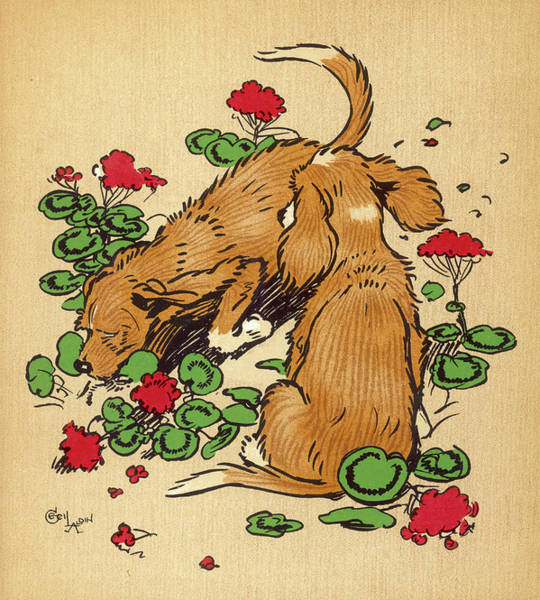 Naughty Dog Wall Art - Drawing - Twin Puppies, Snip And Snap,  Bury by Mary Evans Picture Library
