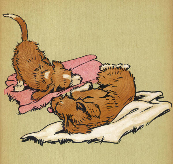 Naughty Dog Wall Art - Drawing - Twin Puppies, Snip And Snap, Roll by Mary Evans Picture Library