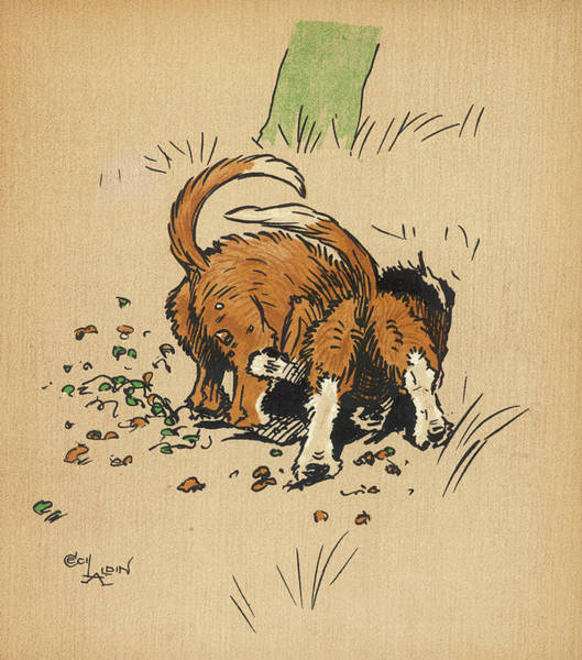Naughty Dog Wall Art - Drawing - Twin Puppies, Snip And Snap,  Try by Mary Evans Picture Library