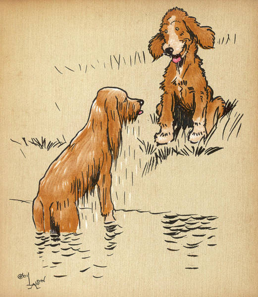 Amuse Drawing - Twin Puppy Snip Emerges Wet by Mary Evans Picture Library